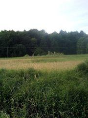landwirtschaftliches Grundstück