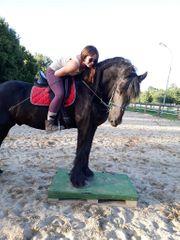 Erfahrene Reitbeteiligung sucht Pferd