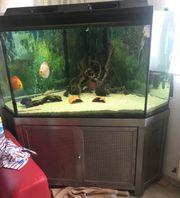 Aquarium mit Unterschrank aus Edelstahl