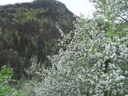 Bergheu Blumenwiese