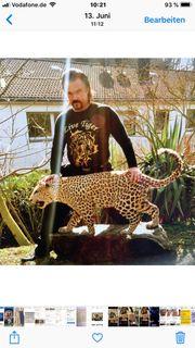 Leoparden Präperat