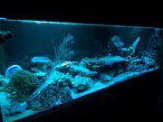 Meerwasseraquarium Aquarienauflösung