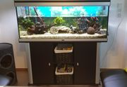 Aquarium 224 l
