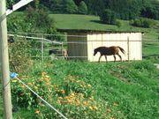 Pferdeplatz Weide mit Weidehütte für