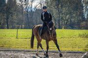 Biete Reitbeteiligung Pferd sucht Reiter