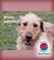 Bruno - auf der Suche nach