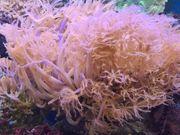 verschiedene Korallen Algen