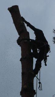 Baumschnitt Baumpflege stückweise Baumfällungen Baumgutachten