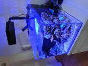 Meerwasseraquarium Nano komplett