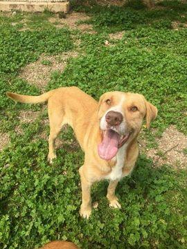 Hunde - Mischlingsrüde Carino