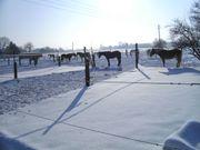 Paddock Pferdeboxen frei