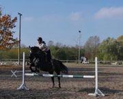 Super liebes Freizeit Pferd abzugeben