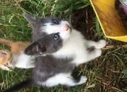 Katzen Baby