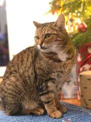 Katze vermisst seit 09 05