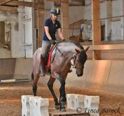 Andalusier Wallach Roan 7 Jahre