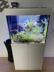 Juwel Lido 120 Meerwasser Aquarium
