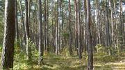 Wald in Roßtal-Buchschwabach 13 593m²
