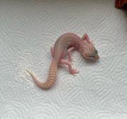 Leopardgecko - Mack Super Snow Tremper