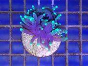 Meerwasser Tiere Pflanzen Korallen