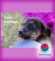 Torvi - ist eine gelehrige Schmusebacke