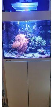 Aquamedic Kauderni Meerwasseraquarium komplett