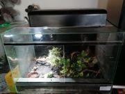 Glasterrarium mit Achatschnecken