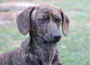 Afonya verspieltes Hundemädchen ca 7