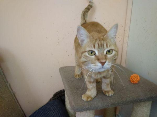 Rote Katze Lilian sucht dringend