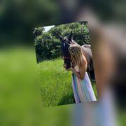 Frau zum Pferde stehlen gesucht -