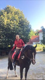 Reitbeteiligung Pferd sucht Reiter