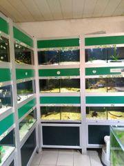 Aquarienzuchtanlage