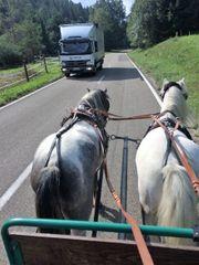 Einfahren ihres Ponys Pferdes von
