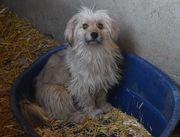 Perla sucht geduldige und Hundeerfahrende