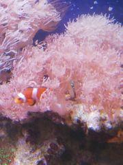 Meerwasserkorallen