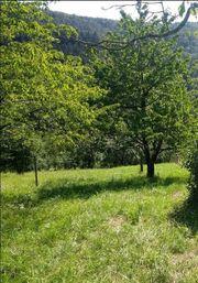 Streuobstwiese Obstgartengrundstück Freizeitwiese Bienenstandort in