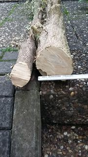 Buchsbaumholz