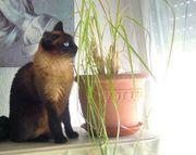 Katzen- und Kleintierbetreuung in 70563