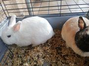 2 schöne kaninchen