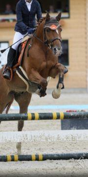 Änfänger pony mit Tunier Erfahrung