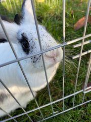 Kaninchenpärchen sucht Zuhause