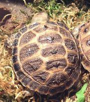 Baby s Schildkröten aus Würzburg