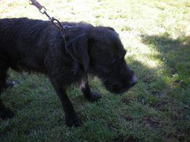 AMINO die Wasserratte Er ist: Kleinanzeigen aus Overath - Rubrik Hunde