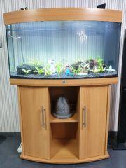 komplett Aquarium Juwel Vision 180