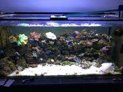 Meerwasser Salzwasser Aquarium 800l komplett