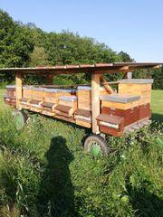Bienenwagen mit 16 Buckfast Völkern