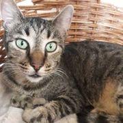 Katzenjunge Amando wartet auf seine