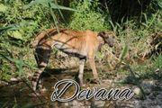 Ist Devana s Leben wertvoll