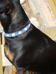 EM-Keramik Zeckenhalsband für Hunde