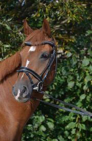 Reitbeteiligungen auf sehr guten Pferden