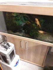 Axolotl komplett mit Aquarium und